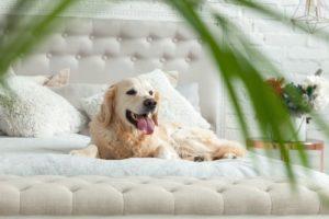 Pet on furniture.